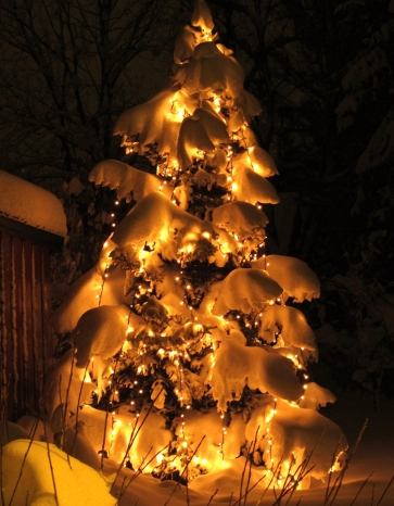 Julelys-snøgran-red