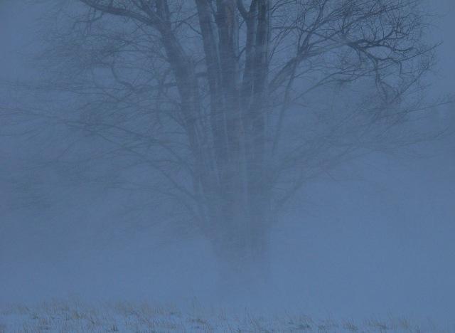 Snøstorm-storalma-Svartd-red